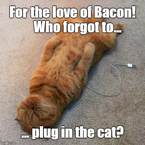 Who forgot to plug in the cat? | For the love of Bacon!  Who forgot to... ... plug in the cat? | image tagged in cats,funny cats,wifi,sleeping cat | made w/ Imgflip meme maker