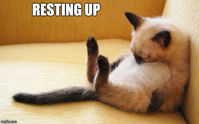 Sleepy Siamese Cat | RESTING UP | image tagged in sleepy siamese cat | made w/ Imgflip meme maker