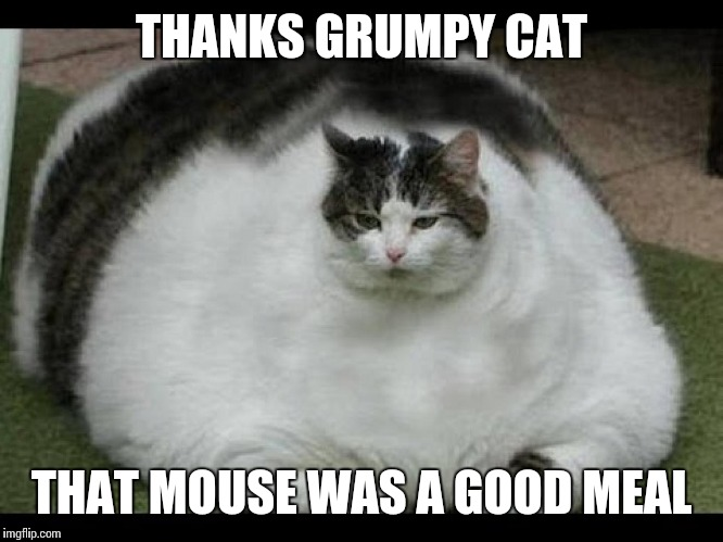 THANKS GRUMPY CAT THAT MOUSE WAS A GOOD MEAL | made w/ Imgflip meme maker