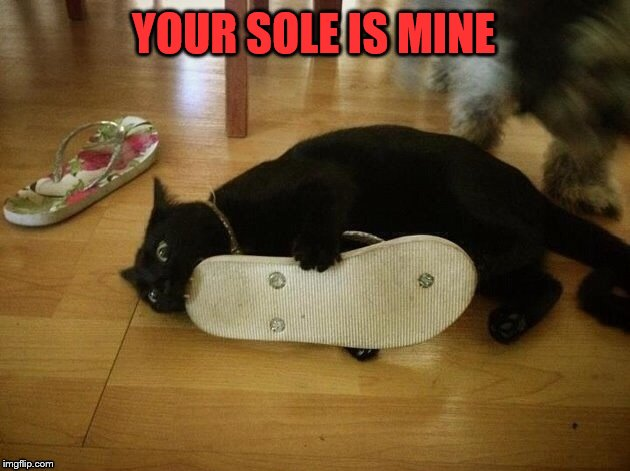 YOUR SOLE IS MINE | image tagged in cats,chewing,flip flops | made w/ Imgflip meme maker