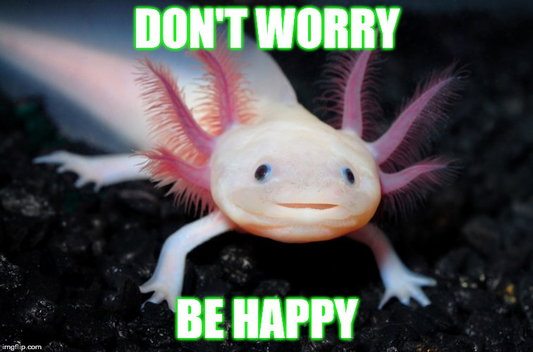 Don't Worry Be Happy |  DON'T WORRY; BE HAPPY | image tagged in memes,don't worry be happy,funny,happy | made w/ Imgflip meme maker