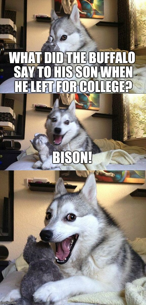 Bye, son  | WHAT DID THE BUFFALO SAY TO HIS SON WHEN HE LEFT FOR COLLEGE? BISON! | image tagged in memes,bad pun dog | made w/ Imgflip meme maker