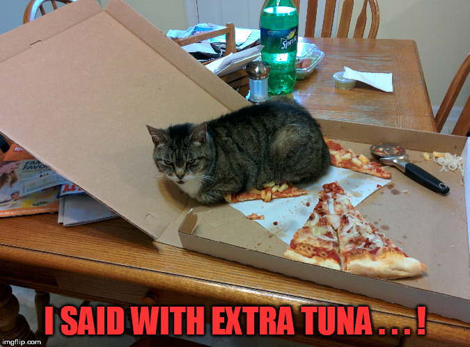 I SAID WITH EXTRA TUNA . . . ! | made w/ Imgflip meme maker