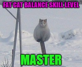 He must be studying Kung Fu or something. | FAT CAT BALANCE SKILL LEVEL MASTER | image tagged in fat cat balance,memes,funny cats,cats,funny,animals | made w/ Imgflip meme maker