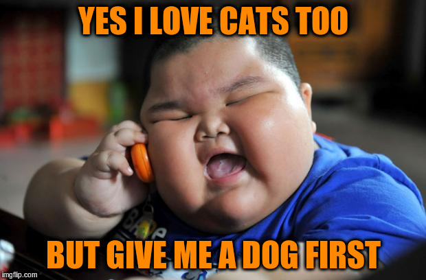 YES I LOVE CATS TOO BUT GIVE ME A DOG FIRST | made w/ Imgflip meme maker