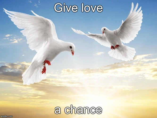 Give love a chance | image tagged in doves | made w/ Imgflip meme maker