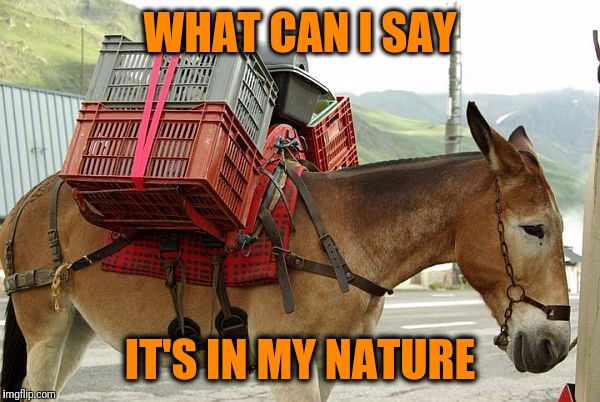 mule | WHAT CAN I SAY IT'S IN MY NATURE | image tagged in mule | made w/ Imgflip meme maker