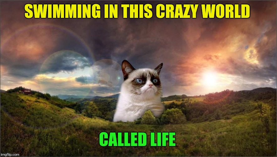 SWIMMING IN THIS CRAZY WORLD CALLED LIFE | made w/ Imgflip meme maker