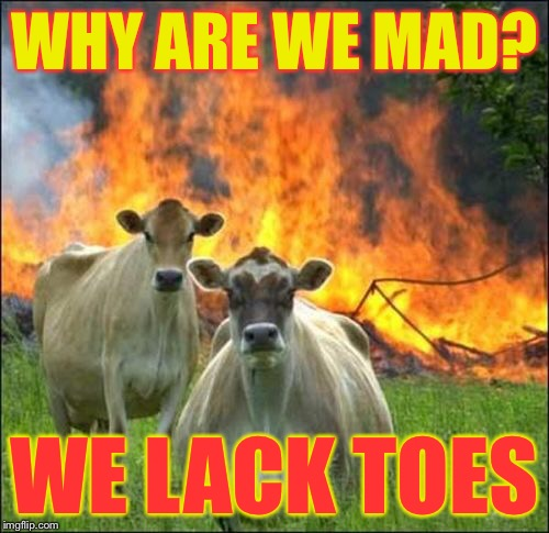 Mad Cows | WHY ARE WE MAD? WE LACK TOES | image tagged in memes,evil cows,mad cows | made w/ Imgflip meme maker