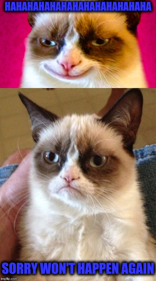 To much Catnip Grumpy?  | HAHAHAHAHAHAHAHAHAHAHAHAHA SORRY WON'T HAPPEN AGAIN | image tagged in memes,grumpy cat | made w/ Imgflip meme maker