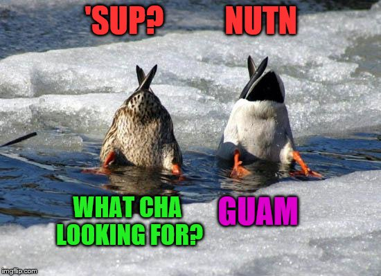A pair of duck ups | 'SUP?          NUTN WHAT CHA LOOKING FOR? GUAM | image tagged in funny memes,duck ups | made w/ Imgflip meme maker
