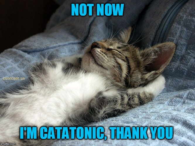 sleeping cat | NOT NOW I'M CATATONIC, THANK YOU | image tagged in sleeping cat | made w/ Imgflip meme maker