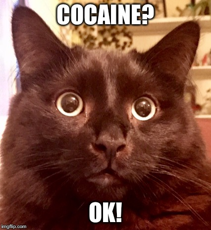 COCAINE? OK! | image tagged in kai the cat | made w/ Imgflip meme maker
