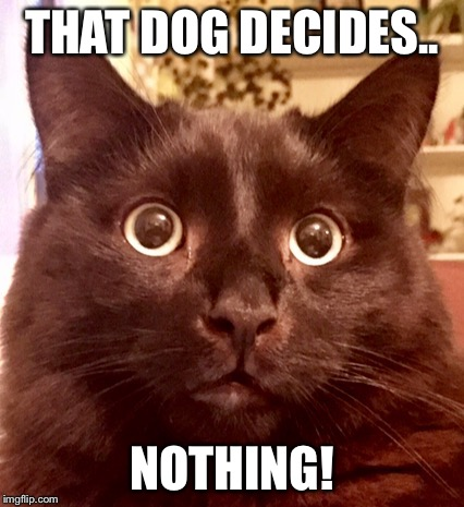 Kai the cat | THAT DOG DECIDES.. NOTHING! | image tagged in kai the cat | made w/ Imgflip meme maker