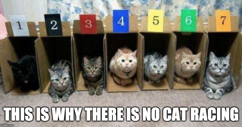 Pretty much. | THIS IS WHY THERE IS NO CAT RACING | image tagged in cat,racing,iwanttobebacon,iwanttobebaconcom,dog racing | made w/ Imgflip meme maker