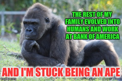 Who Decides ? | THE REST OF MY FAMILY EVOLVED INTO HUMANS AND WORK AT BANK OF AMERICA AND I'M STUCK BEING AN APE | image tagged in memes,apes,monkey | made w/ Imgflip meme maker