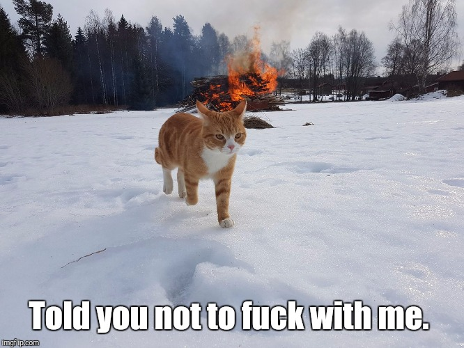Havoc Cat | Told you not to f**k with me. | image tagged in havoc cat | made w/ Imgflip meme maker