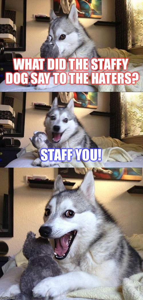 Bad Pun Dog Meme | WHAT DID THE STAFFY DOG SAY TO THE HATERS? STAFF YOU! | image tagged in memes,bad pun dog | made w/ Imgflip meme maker