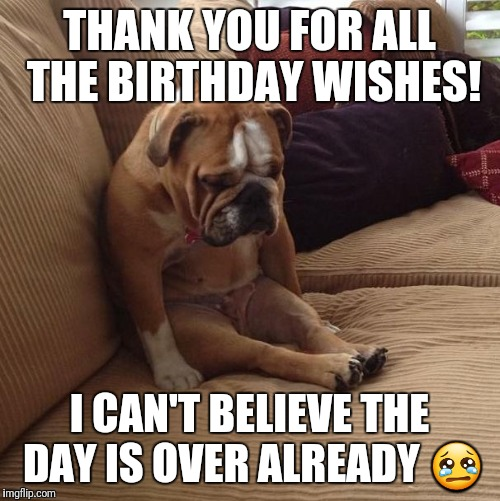 bulldogsad | THANK YOU FOR ALL THE BIRTHDAY WISHES! I CAN'T BELIEVE THE DAY IS OVER ALREADY  | image tagged in bulldogsad | made w/ Imgflip meme maker