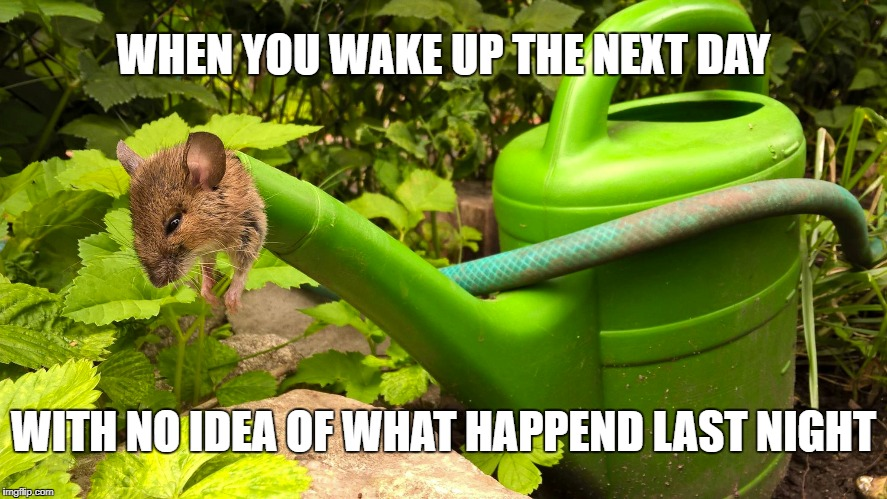 Being stuck in a can | WHEN YOU WAKE UP THE NEXT DAY WITH NO IDEA OF WHAT HAPPEND LAST NIGHT | image tagged in stuck,watering can,mouse,hangover,no idea,last night | made w/ Imgflip meme maker