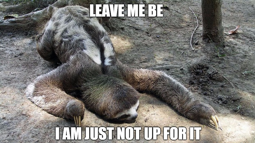 When you just wanna do nothing for the whole week | LEAVE ME BE I AM JUST NOT UP FOR IT | image tagged in lazy sloth,lazy animal,animal lying down,aimless,tired | made w/ Imgflip meme maker