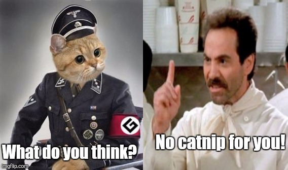 No catnip for you! What do you think? | made w/ Imgflip meme maker