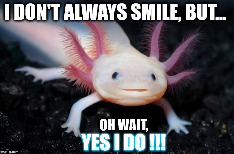Smiling Mexican Axolotl - I don't Always Smile...?! | I DON'T ALWAYS SMILE, BUT... OH WAIT, YES I DO !!! | image tagged in smiling mexican axolotl,memes,funny,smile,laugh,happy | made w/ Imgflip meme maker