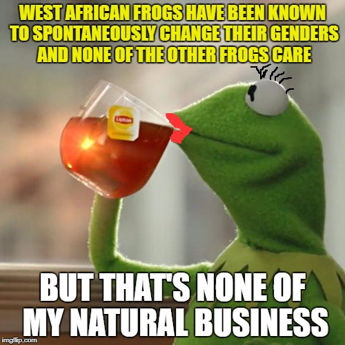 Get over it | WEST AFRICAN FROGS HAVE BEEN KNOWN TO SPONTANEOUSLY CHANGE THEIR GENDERS AND NONE OF THE OTHER FROGS CARE BUT THAT'S NONE OF MY NATURAL BUSI | image tagged in memes,but thats none of my business,kermit the frog | made w/ Imgflip meme maker