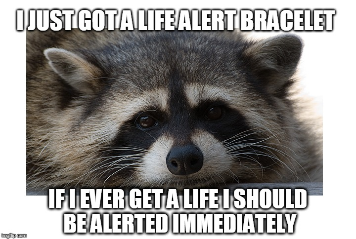 Eat, sleep, work. What a life! (Not) | I JUST GOT A LIFE ALERT BRACELET IF I EVER GET A LIFE I SHOULD BE ALERTED IMMEDIATELY | image tagged in life alert,get a life,raccoon | made w/ Imgflip meme maker