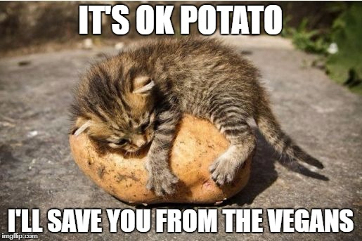 IT'S OK POTATO I'LL SAVE YOU FROM THE VEGANS | image tagged in cat hugging potato | made w/ Imgflip meme maker