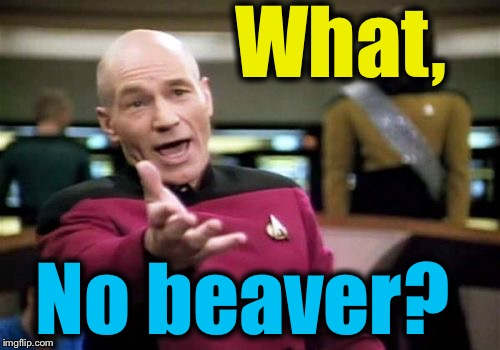 Picard Wtf Meme | What, No beaver? | image tagged in memes,picard wtf | made w/ Imgflip meme maker