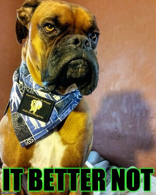 Grumpy Dog | IT BETTER NOT | image tagged in grumpy dog | made w/ Imgflip meme maker