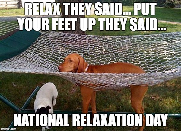 dog hammock | RELAX THEY SAID...PUT YOUR FEET UP THEY SAID... NATIONAL RELAXATION DAY | image tagged in dog hammock | made w/ Imgflip meme maker