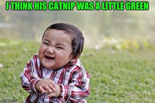 Evil Toddler Meme | I THINK HIS CATNIP WAS A LITTLE GREEN | image tagged in memes,evil toddler | made w/ Imgflip meme maker