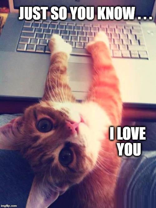 JUST SO YOU KNOW . . . I LOVE YOU | image tagged in i love you,i love cats,cat | made w/ Imgflip meme maker