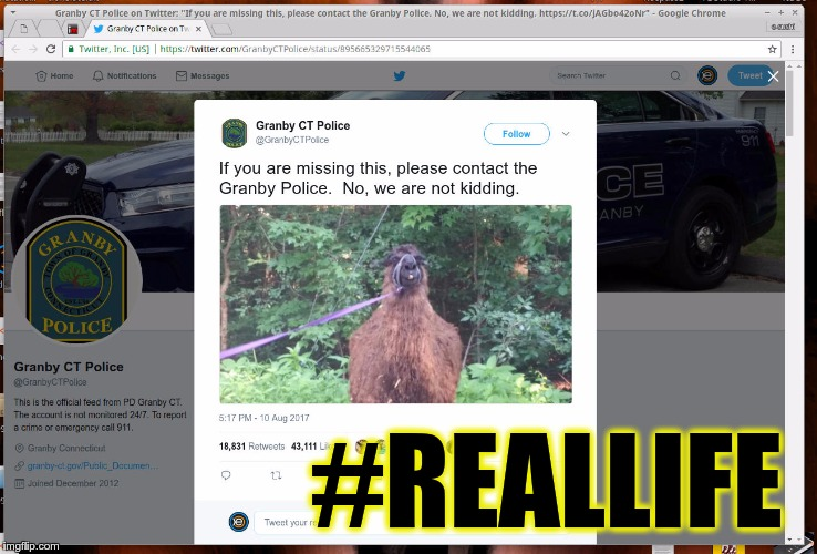 POLICE WANTS YOU TO PICK UP YOUR LAMA | #REALLIFE | image tagged in memes,funny,twitter,reallife,lama,police | made w/ Imgflip meme maker