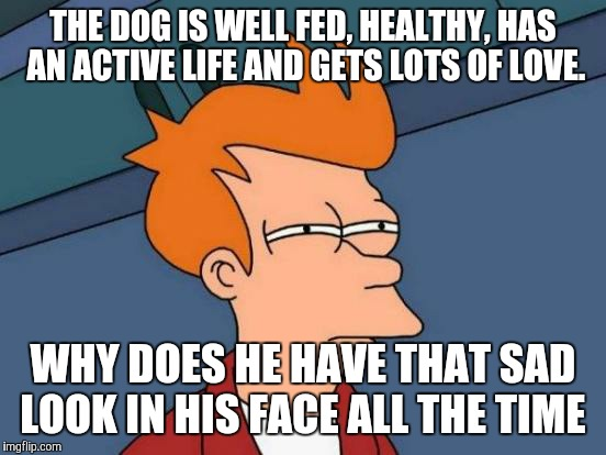 Futurama Fry Meme | THE DOG IS WELL FED, HEALTHY, HAS AN ACTIVE LIFE AND GETS LOTS OF LOVE. WHY DOES HE HAVE THAT SAD LOOK IN HIS FACE ALL THE TIME | image tagged in memes,futurama fry | made w/ Imgflip meme maker
