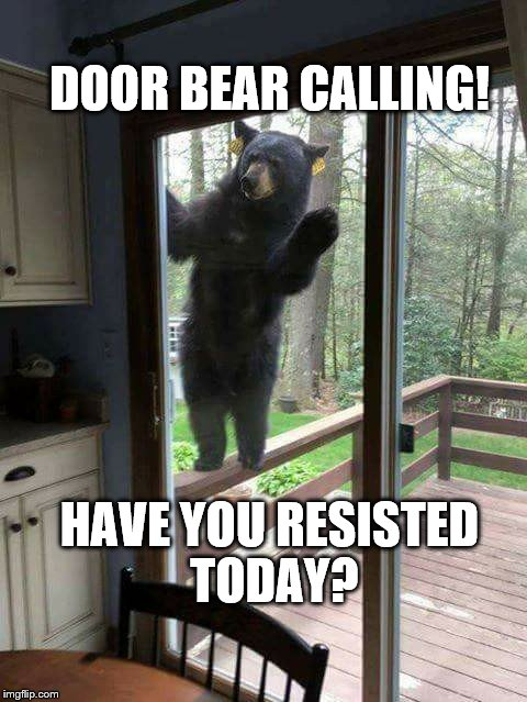 Door Bear Calling | DOOR BEAR CALLING! HAVE YOU RESISTED TODAY? | image tagged in door bear calling,theresistance,resist | made w/ Imgflip meme maker