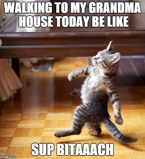 Cat Walking Like A Boss | WALKING TO MY GRANDMA HOUSE TODAY BE LIKE SUP BITAAACH | image tagged in cat walking like a boss | made w/ Imgflip meme maker