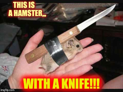 Lock and Load Hamster | THIS IS     A HAMSTER,,, WITH A KNIFE!!! | image tagged in lock and load hamster | made w/ Imgflip meme maker