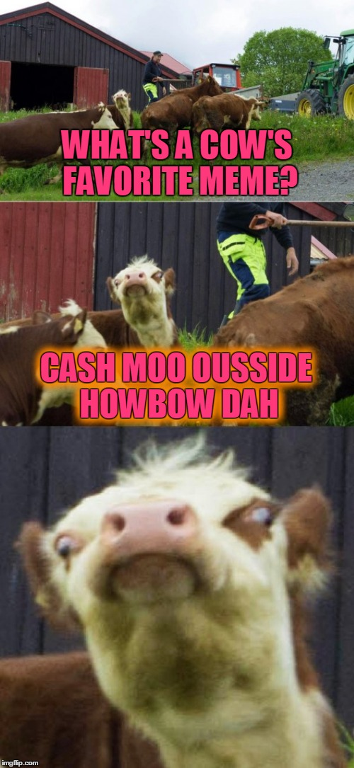 Hahahahahaha no not really | WHAT'S A COW'S FAVORITE MEME? CASH MOO OUSSIDE HOWBOW DAH CASH MOO OUSSIDE HOWBOW DAH | image tagged in bad pun cow,memes,bad puns,cash me ousside howbow dah,dead memes | made w/ Imgflip meme maker