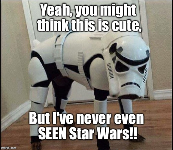Not A Fan | Yeah, you might think this is cute, But I've never even SEEN Star Wars!! | image tagged in not a fan,memes,star wars | made w/ Imgflip meme maker