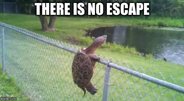 THERE IS NO ESCAPE | made w/ Imgflip meme maker