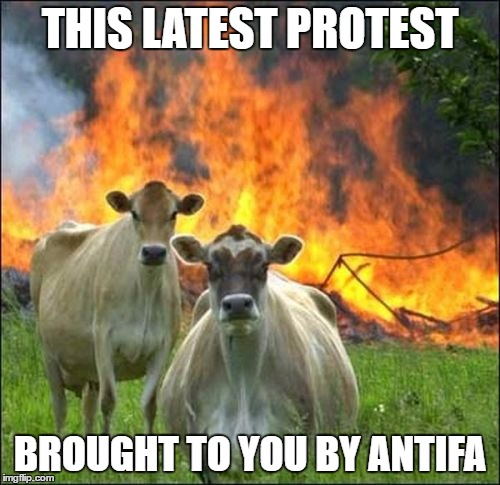 Evil Cows Meme | THIS LATEST PROTEST BROUGHT TO YOU BY ANTIFA | image tagged in memes,evil cows,antifa,anti trump,protest,retarded liberal protesters | made w/ Imgflip meme maker