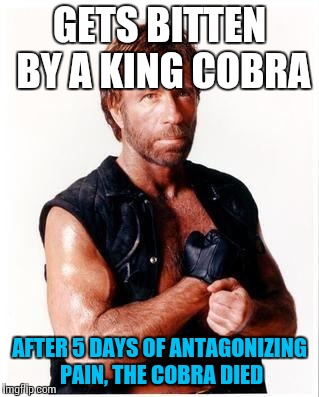 Thanks to SubjectMatters for the idea! | GETS BITTEN BY A KING COBRA AFTER 5 DAYS OF ANTAGONIZING PAIN, THE COBRA DIED | image tagged in memes,chuck norris flex,chuck norris,funny | made w/ Imgflip meme maker