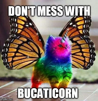 Rainbow unicorn butterfly kitten | DON'T MESS WITH BUCATICORN | image tagged in rainbow unicorn butterfly kitten | made w/ Imgflip meme maker