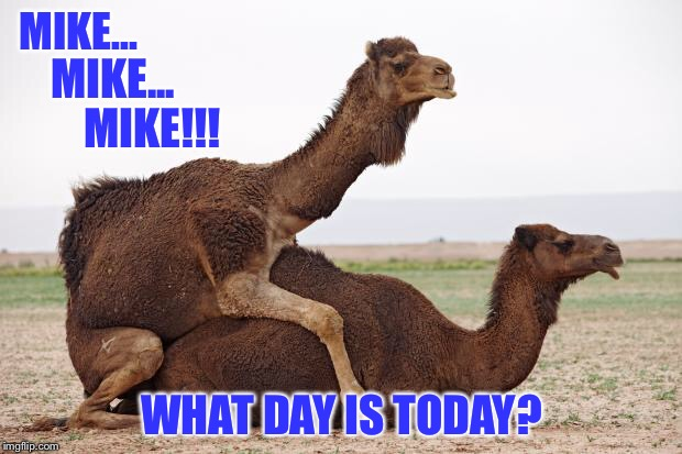 Happy Hump Day y'all! | MIKE... WHAT DAY IS TODAY? MIKE... MIKE!!! | image tagged in camelsex,hump day,wednesday | made w/ Imgflip meme maker