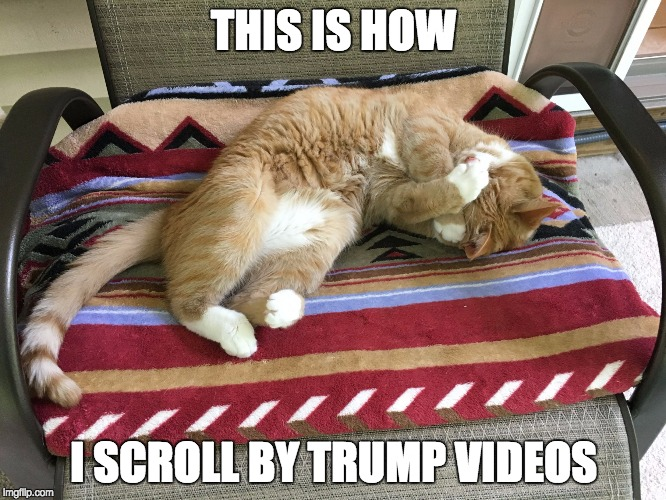 THIS IS HOW I SCROLL BY TRUMP VIDEOS | image tagged in rose | made w/ Imgflip meme maker