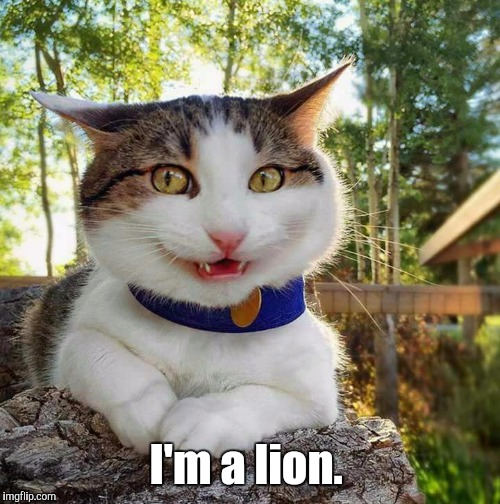 Smiling Cat | I'm a lion. | image tagged in smiling cat | made w/ Imgflip meme maker