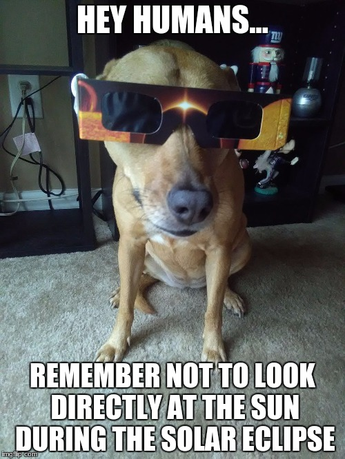 Eclipse Dog | HEY HUMANS... REMEMBER NOT TO LOOK DIRECTLY AT THE SUN DURING THE SOLAR ECLIPSE | image tagged in eclipse dog | made w/ Imgflip meme maker